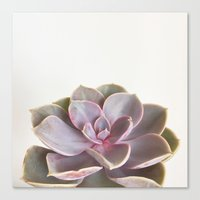 Purple Succulent Canvas Print