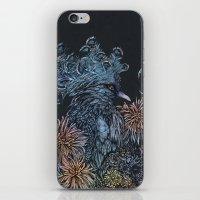 Pigeon lullaby iPhone & iPod Skin