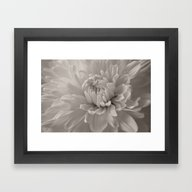 Monochrome Chrysanthemum… Framed Art Print