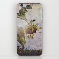 Rural Sky Sunflower iPhone & iPod Skin