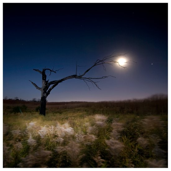 Witches Tree, Grab the Moon Canvas Print