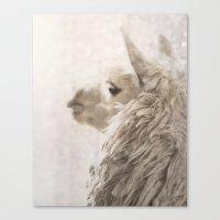Magical White Alpaca Canvas Print