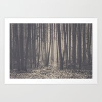 Into the depths of the forest Art Print