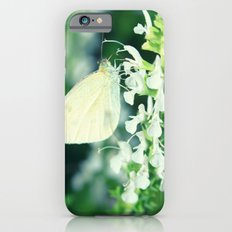White Cabbage Butterfly On A Flower, Pieris rapae iPhone 6 Slim Case