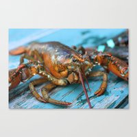 Maine Lobster Canvas Print