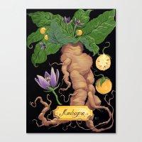 Mandrake Root Canvas Print