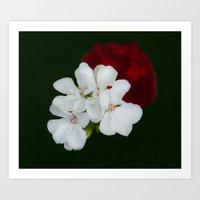 Geranium As Art Art Print