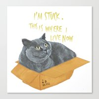 Boxcat Canvas Print