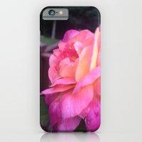 Roses in Rhode Island iPhone 6 Slim Case