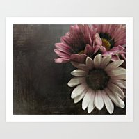 gazania flowers Art Print