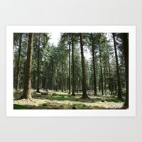 Dartmoor Woods Art Print