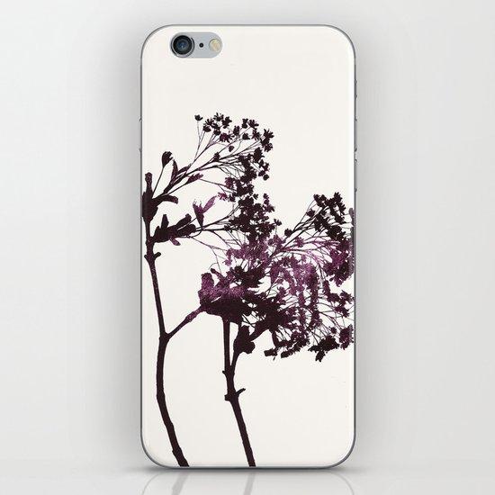 sugar maple 1 iPhone & iPod Skin