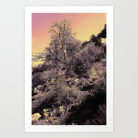 Desert Sunrise Art Print