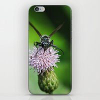 Bee and a flower iPhone & iPod Skin