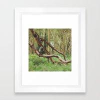 Wild Baboon in Kenya Framed Art Print