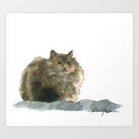 Cat on the rocks Art Print