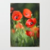 Warmth- Poppies In Love  Canvas Print