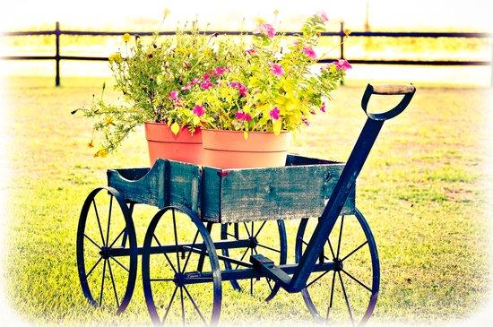 Blooming Wagon Canvas Print