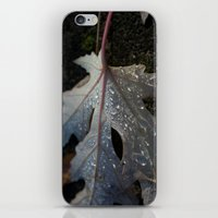 Maple Leaf iPhone & iPod Skin