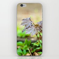 Baby Maple iPhone & iPod Skin