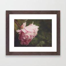 Pink Peony Framed Art Print