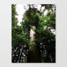 Redwoods #3 Canvas Print