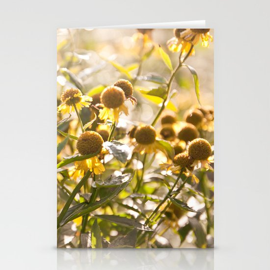 Flowers in Mt. Rogers, Virginia Stationery Card