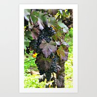 Grapes/Traube Art Print