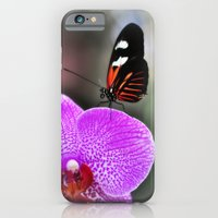 Butterfly Garden 3 iPhone 6 Slim Case
