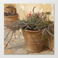 Courtyard Plants Canvas Print