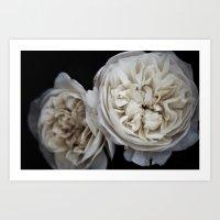 Petticoat Roses Art Print