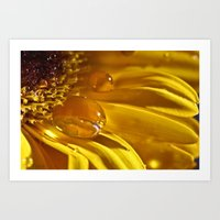 Liquid Gold Art Print