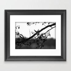 Free like a bird Framed Art Print