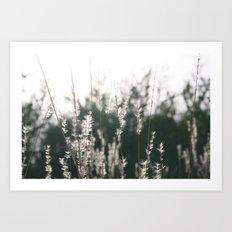 White to Light Art Print