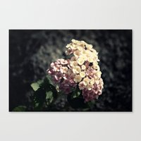 A Simple Gift Canvas Print
