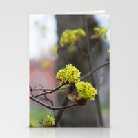 blooming maple trees Stationery Cards