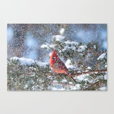Let It Snow (male Northern Cardinal) Canvas Print