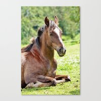 Sleeping Horse. Canvas Print