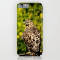 Hawk in sunflowers iPhone 6 Slim Case