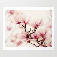 Japanese Magnolia I Art Print