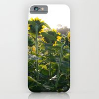 Sunflower Fields Forever - No. 2 iPhone 6 Slim Case