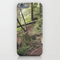 A Walk In The Redwoods iPhone 6 Slim Case