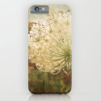 Queen Anne's Lace Sunset iPhone 6 Slim Case