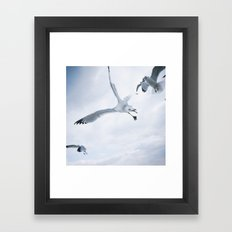 Seagull {Two} Framed Art Print