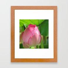 Lotus Summer Framed Art Print