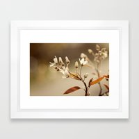 Spring Evening Framed Art Print