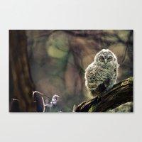 Tawny Owl Chick Canvas Print