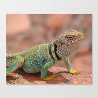 Eastern Collard Lizard Canvas Print