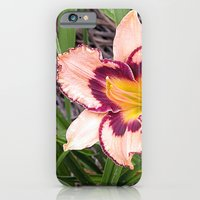 Pink Daylily Growing In … iPhone 6 Slim Case