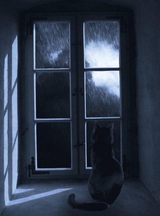 Watching the rain Art Print